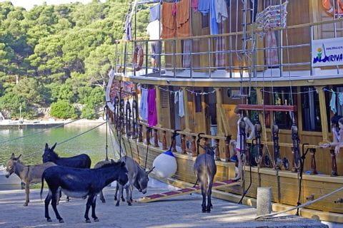 Schiff mit Eseln