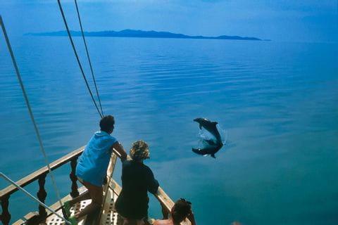Entdecken Sie Delfine vom Schiff aus!