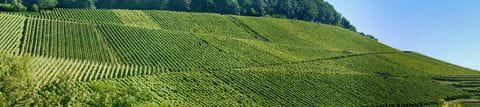 Impressive vineyards