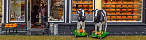 Traditioneller Käseladen in Holland