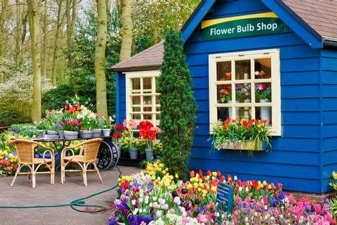 Blumenladen in der Nähe von Amsterdam