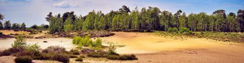 Nationalpark De Maasduinen