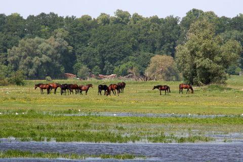 Pferde an der Havel