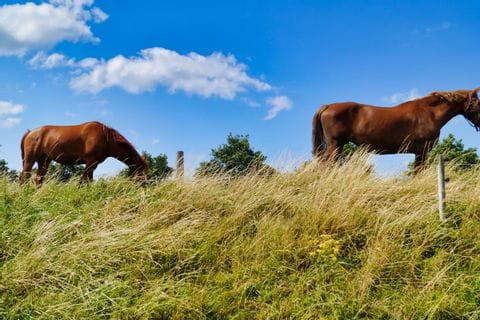 Pferde in Zeeland
