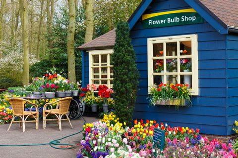Florist, Netherlands