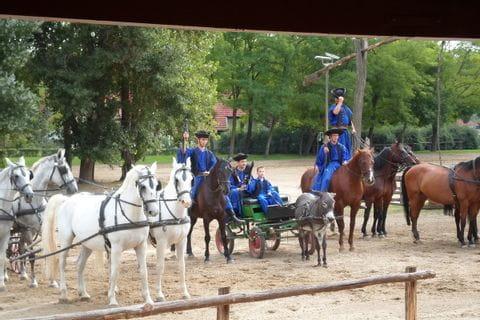 Puszta Pferde Show